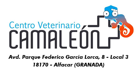 banner-clinica-veterinaria